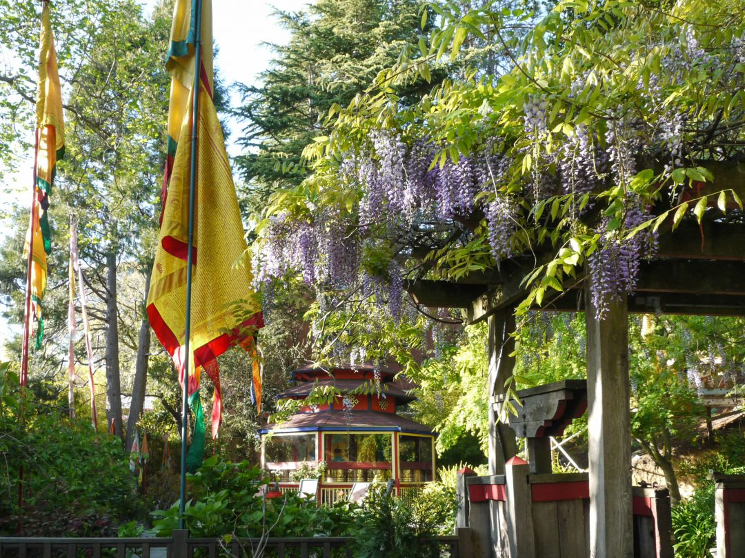 Image of the Meditation Gardens